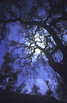 лунный календарь для сада и огорода