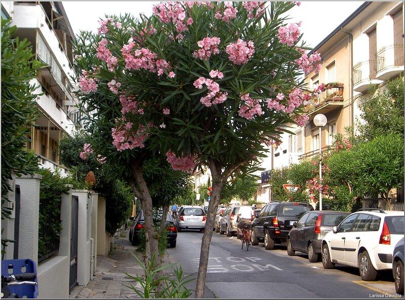 Viareggio-2006