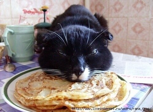 Не всё коту Масленица!