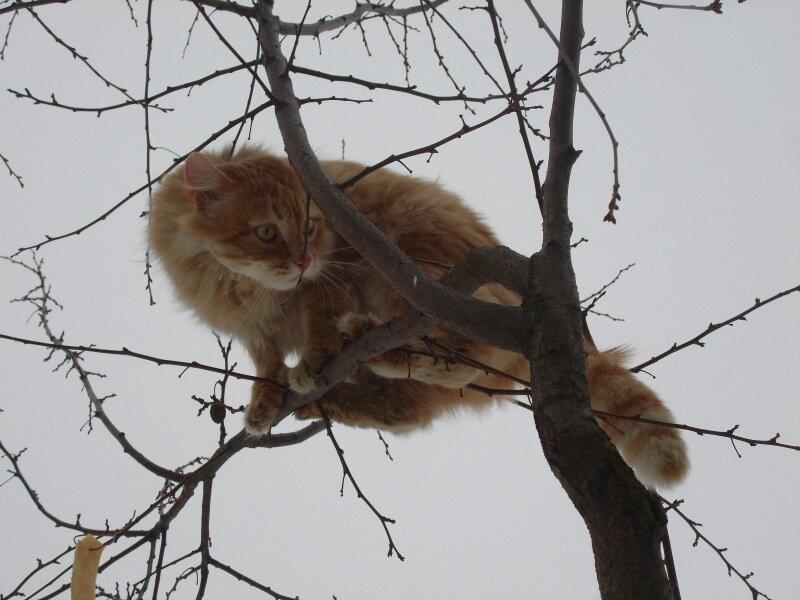 Котик Персик-Рыжик,с.Остров,подворье