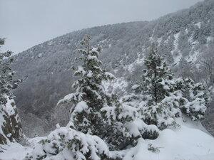 Февраль в горах Крыма. 2010г. Арина.