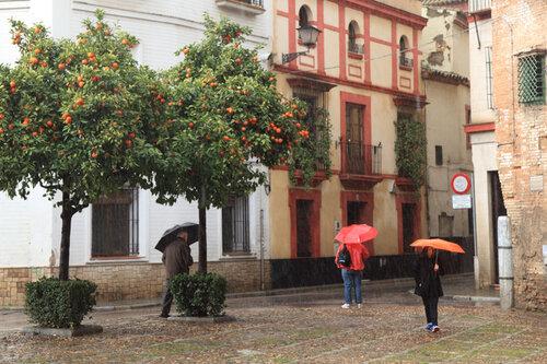 Севильские зонтики у дома Пилата