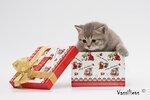 Котята клуба Veritas-Cats