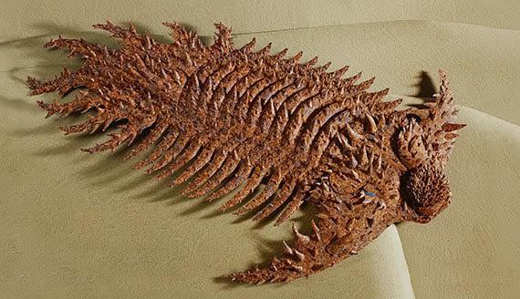 Terataspis — это странный род трилобитов из девонского периода. Его тело было полностью покрыто небо