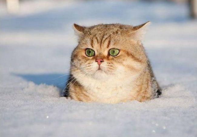 Кто тут застрял? Никто незастрял. Сижу себе, снежком любуюсь.