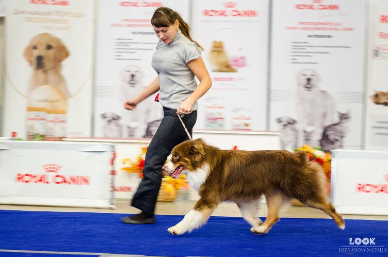 Выставочные успехи наших собак - 5 - Страница 30 0_afada_b481a536_XL
