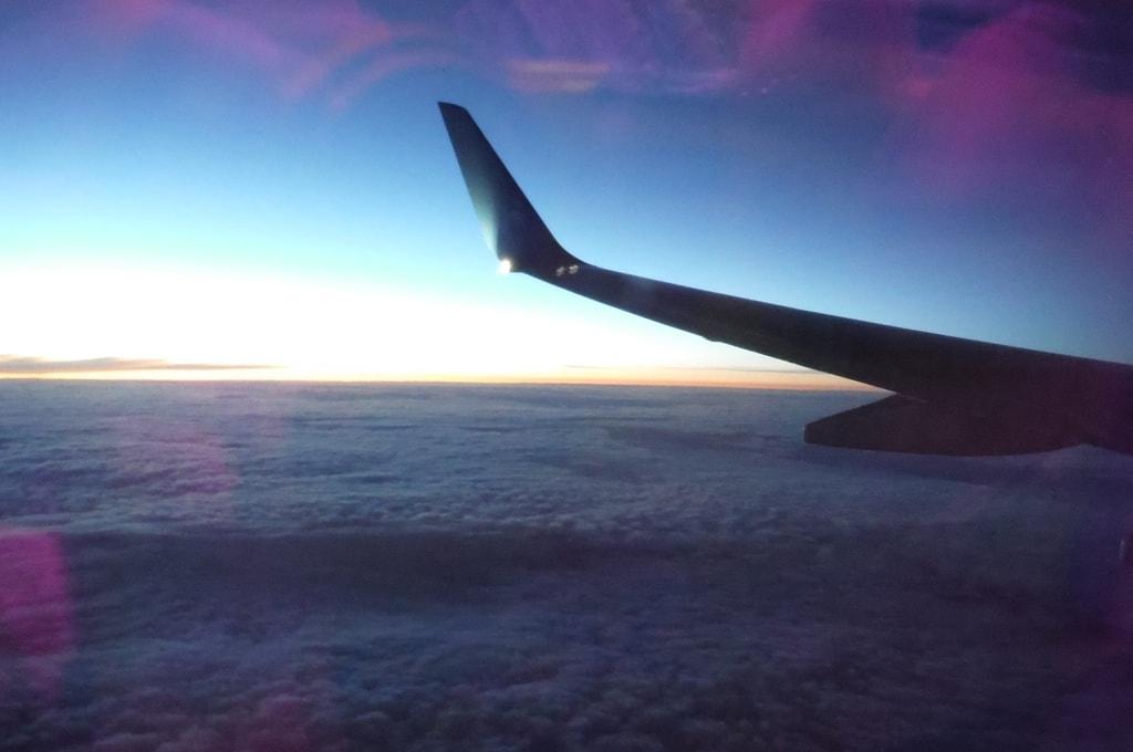 Виды в полете