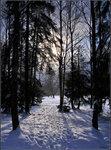 в Павловском зимнем лесу :)
