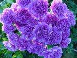 Цветы (2).jpg