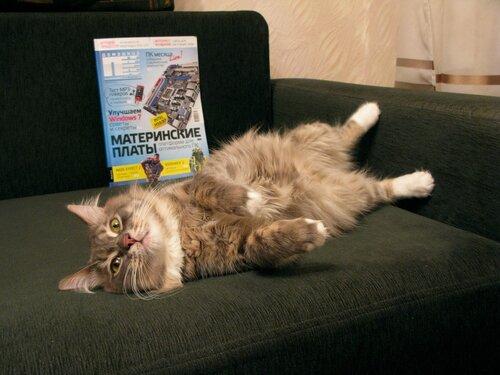 Мой кот-читатель