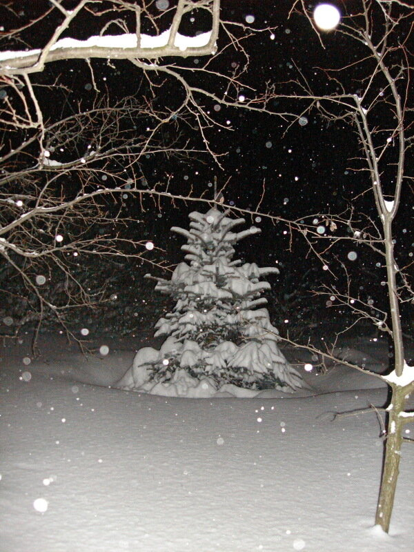 Зима,с.Остров, подворье,зимний райский садик,февраль