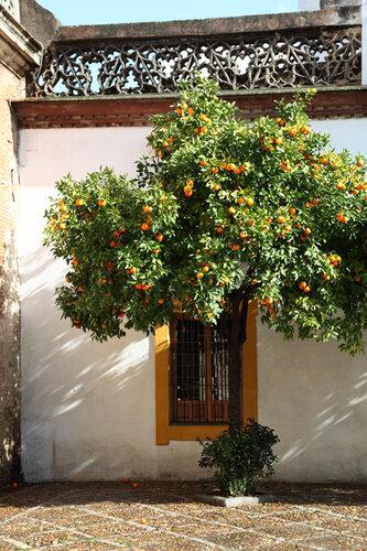 Снова апельсины