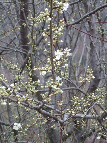 весна 5