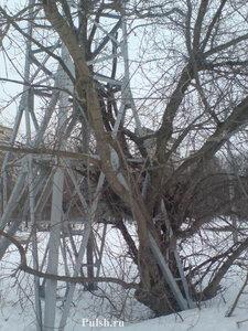 Электромачта и дерево 2