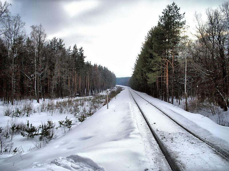 железная дорога уходит в лес