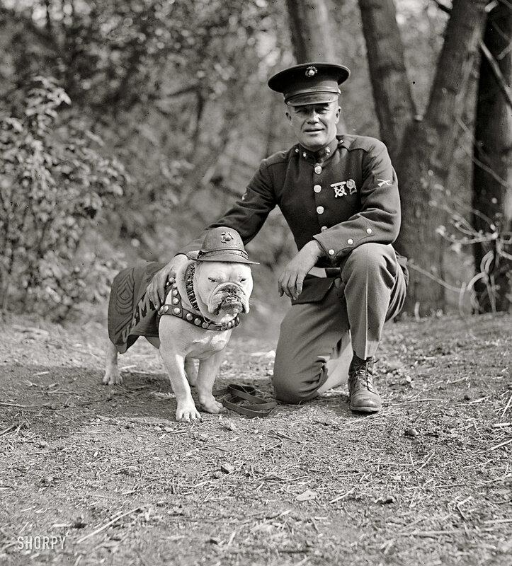 Старинное фото.Портрет с собакой.Сержант Билл