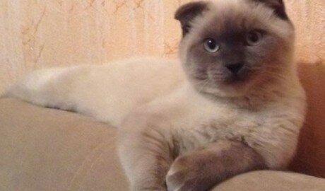 Жители российского Барнаула выдвигают в мэры кота Барсика