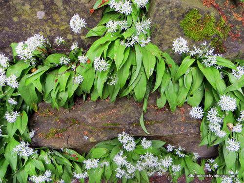 Цветы на скале, из которой вырублен памятник в Люцерне