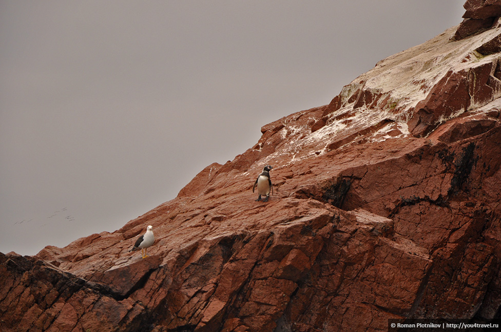 0 16174b d68acc31 orig Национальный парк Паракас и острова Бальестас в Перу