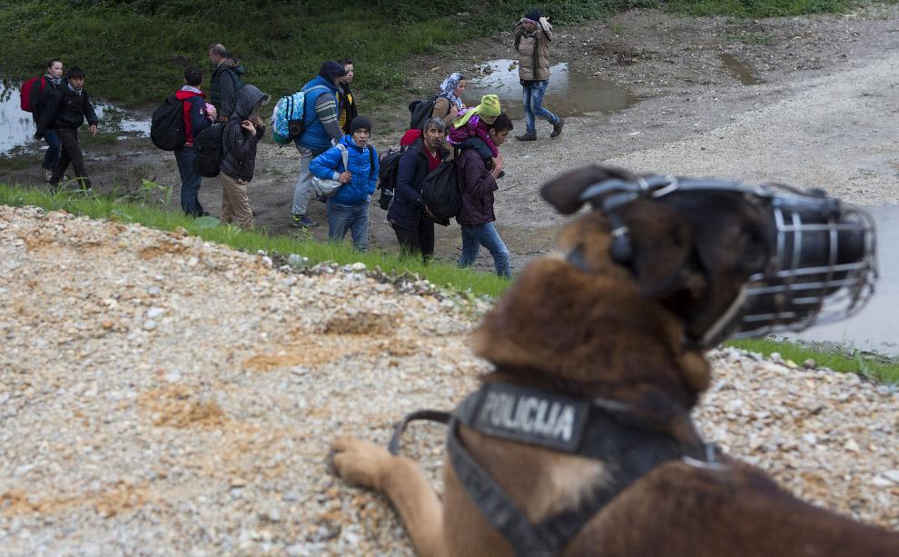 6. Граница Словении-Австрии, 22 октября 2015. Мигранты, в основном, желают попасть в Австрию и Герма