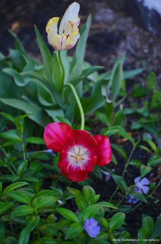 Цветы у ГТРК-Саратов, 21 мая 2015 года