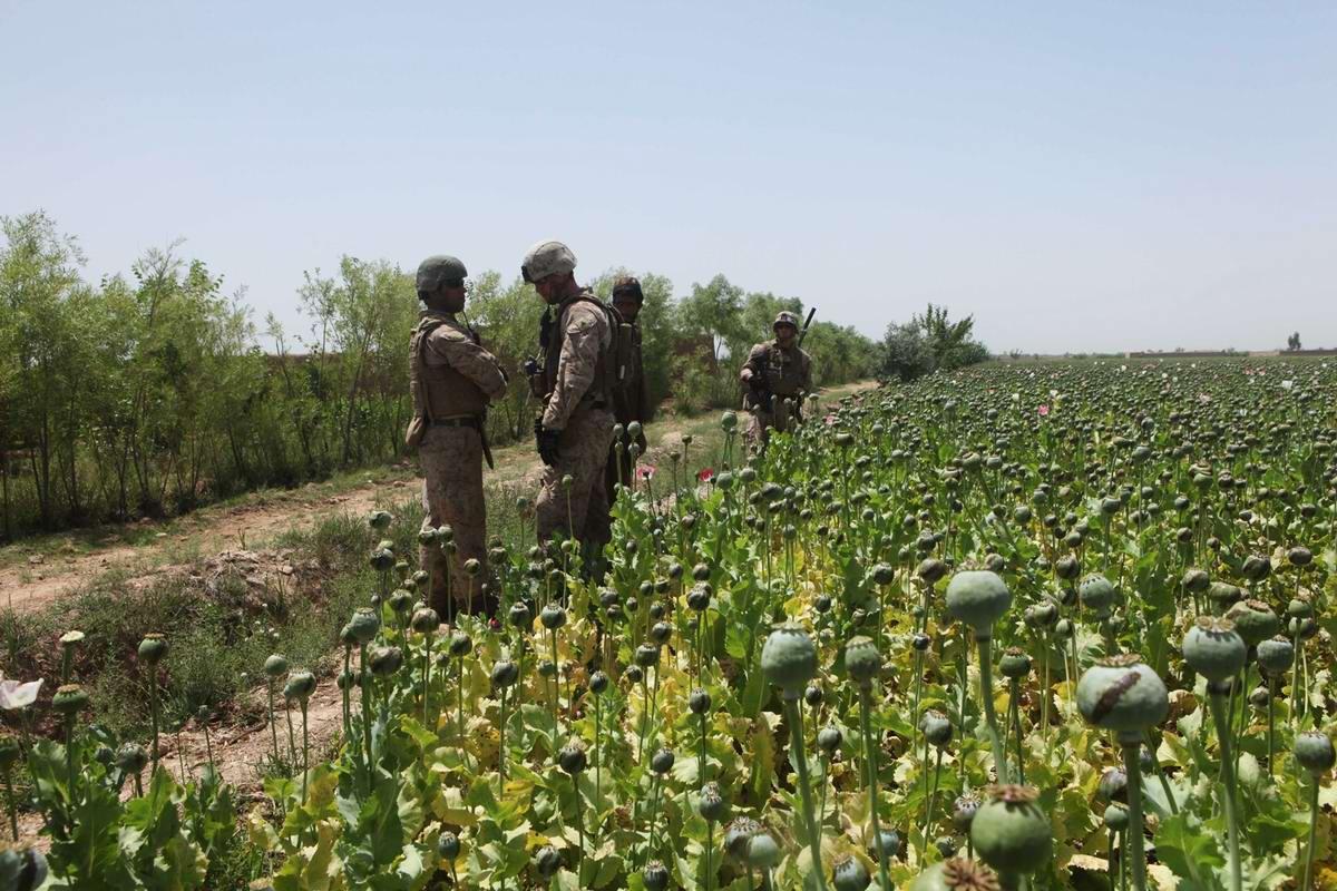Посреди маковых полей Афганистана - фотографии военнослужащих корпуса морской пехоты США (24)