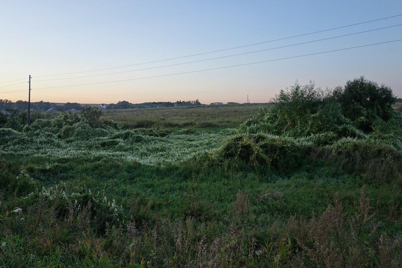 цветущая стелющаяся трава