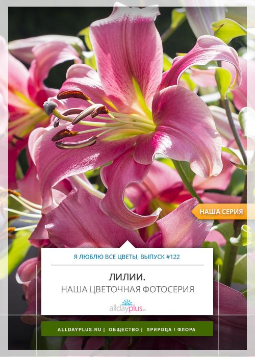 Я люблю все цветы, выпуск 122 | «Лилия - олицетворение невинности и чистоты».