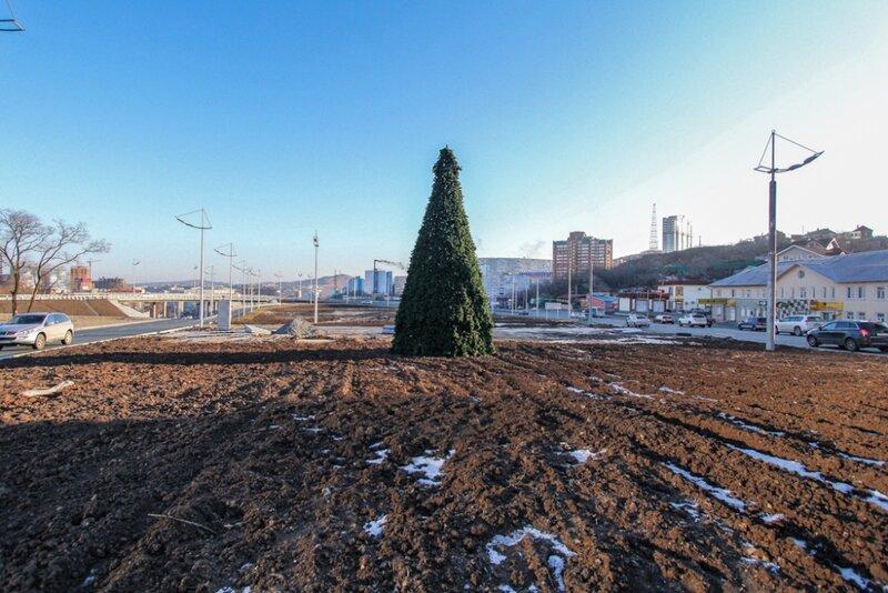 во Владивостоке установили елку
