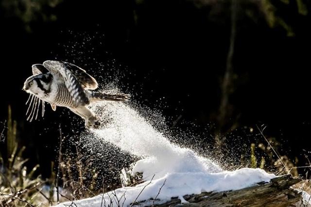100 самых красивых зимних фотографии: пейзажи, звери и вообще 0 10f5d8 509c792b orig