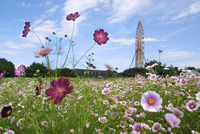 Живописный японский парк Хитати Кайхин 0 1422df 1b5e8462 orig