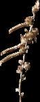 ldavi-ThePoet'sKeepsakes-driedflower2.png