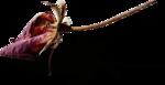 ldavi-ThePoet'sKeepsakes-driedrose1.png