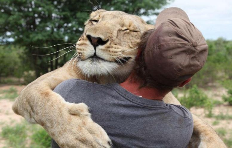 добрый лев дружба человека и льва