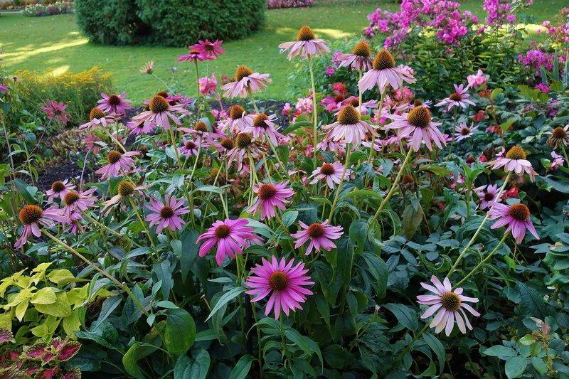 Цветы в Екатерининском парке