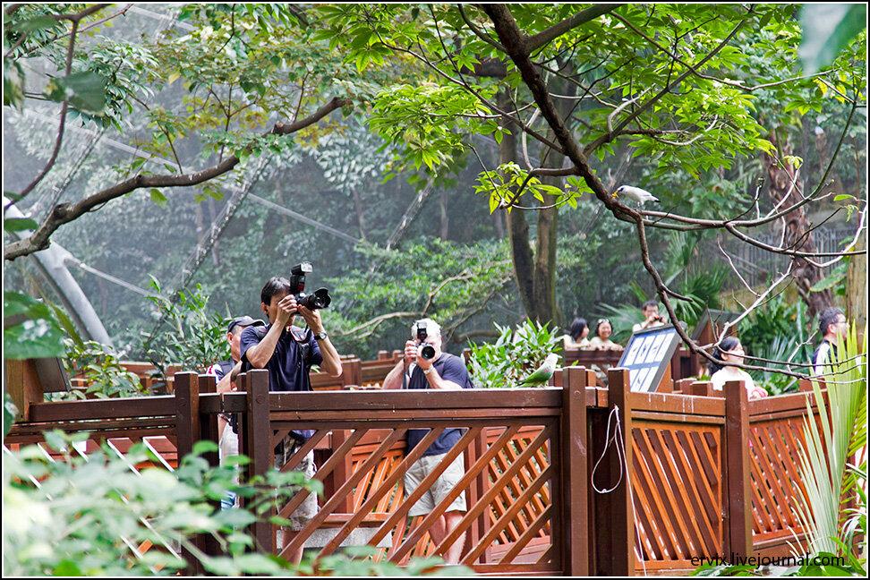 Центральный парк Гонконга. Фотографы
