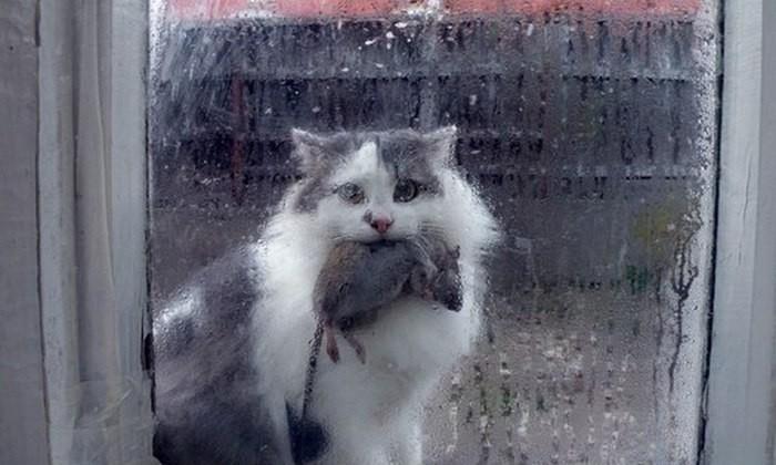 кошки-охотник.jpg