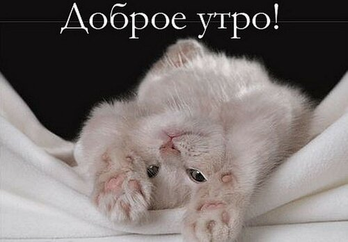 httpnadpis.com_.uadobroe-utro-s-kotyonkom.jpg