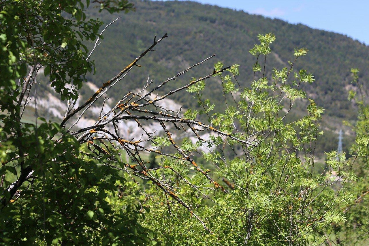 The hack. Walk to the St. Michael's bridge (Puente San Miguel)