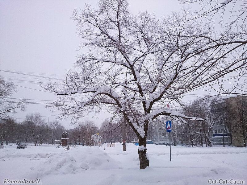 Заснеженные деревья и кустарники