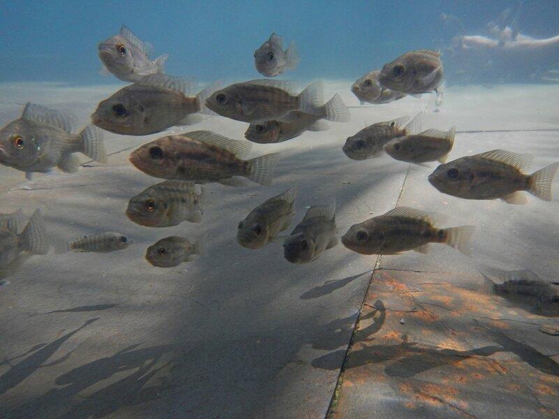 Рыбки в бассейне - Термальные источники Наньтянь