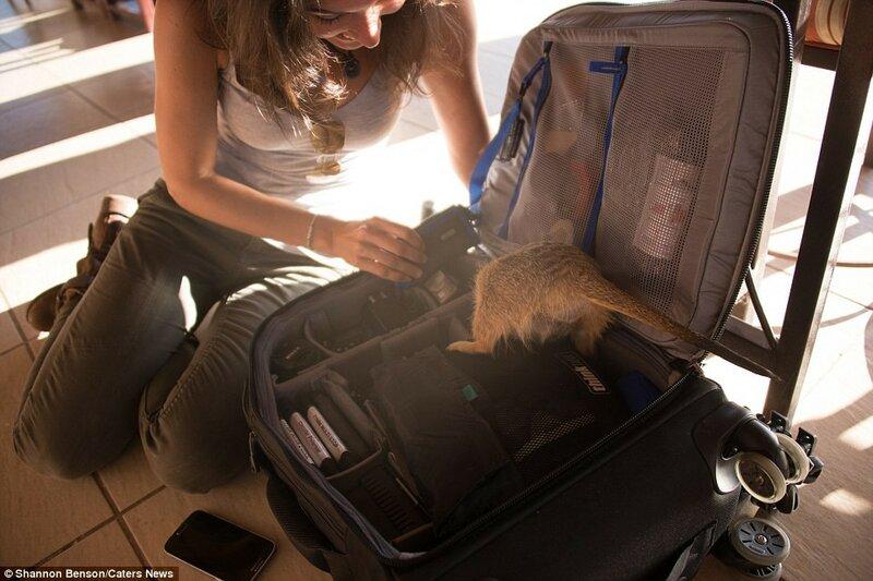 Сложно сдержать смех, когда в твоей сумке роется лемур.