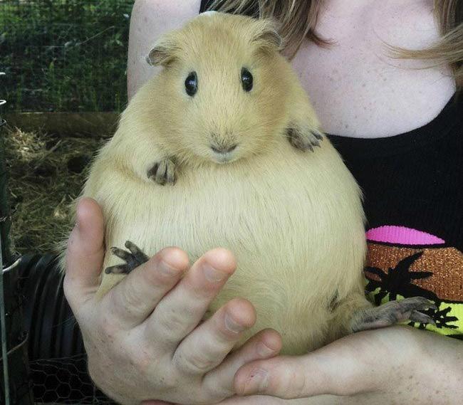 Беременные животные