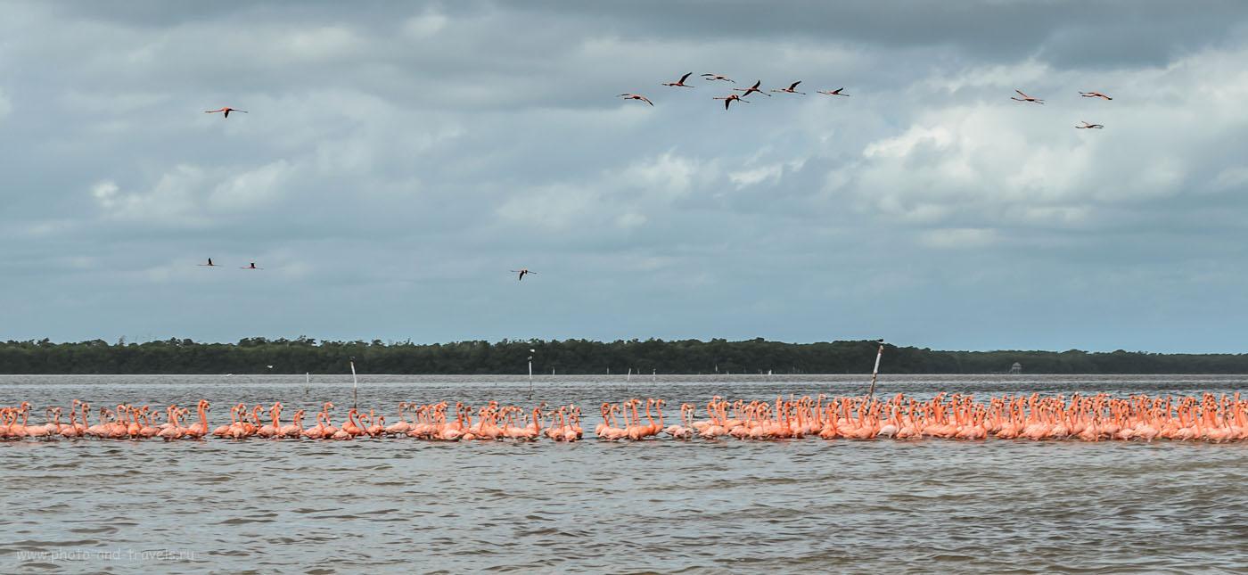 Фото 12. Самостоятельные экскурсии из Канкуна. Фламинго в национальном парке Селестун (Celestun) в Мексике. Отчет о том, как мы взяли напрокат машину и путешествовали по стране.