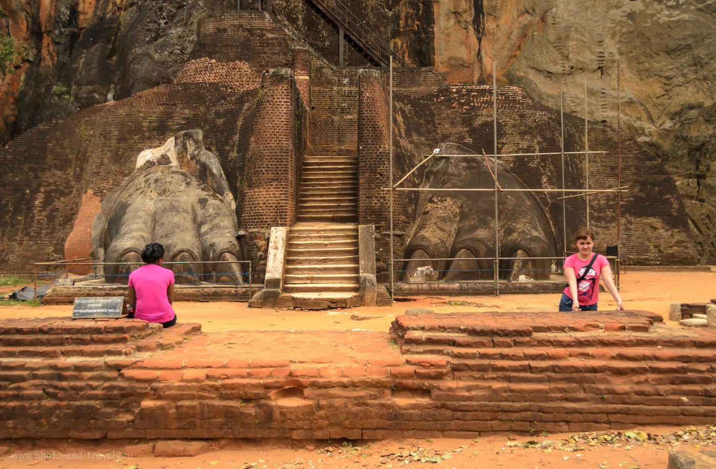 Фото 10. Вот за эти лапы и назвали гору «Сигирия» (Sigiriya или Sinhagiri), что переводится с сингальского языка, как Львиная скала. Стоит ли ехать на экскурсию? 1/2500, 5.0, 640, 24.