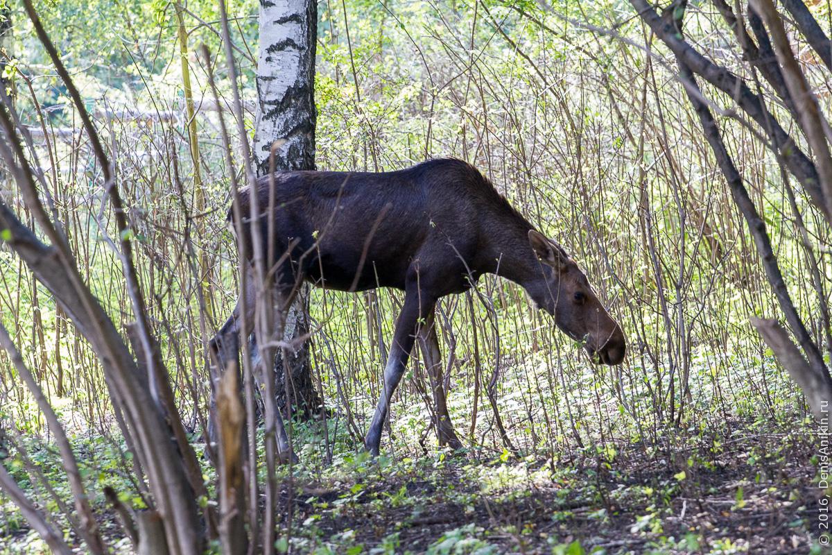 Пензенский зоопарк. Животные 23