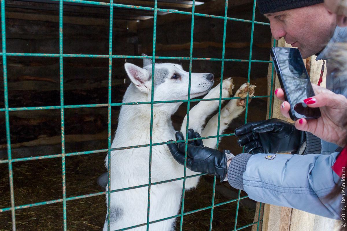Питомник сибирских хаски DogWinter 7