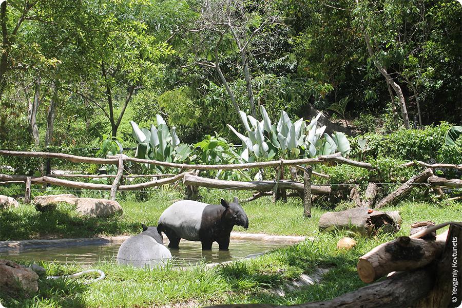 Тапиры купаются в искусственном пруду, Khao-Kheow Open Zoo