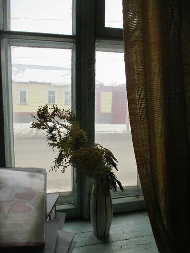 Мимоза на окне