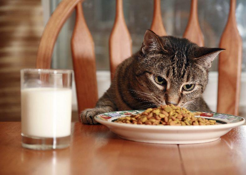кошка ест за столом